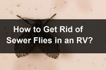 RV sewer flies 3